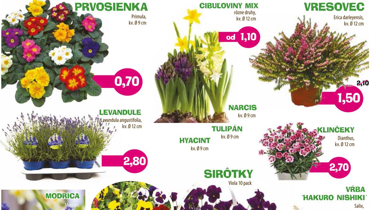 Jarná výsadba, kvety, priesady
