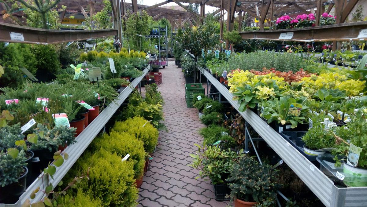 Záhradníctvo Agroservis Stupava - novinka